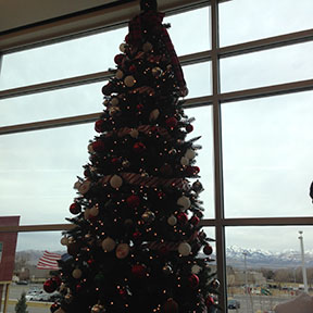 The school Christmas tree stands   in the library on December 15, 2016.
