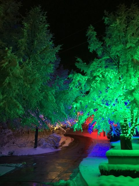 Sandra Coveys festive Christmas lights brightening up her front yard in Provo utah at her house on Christmas day.