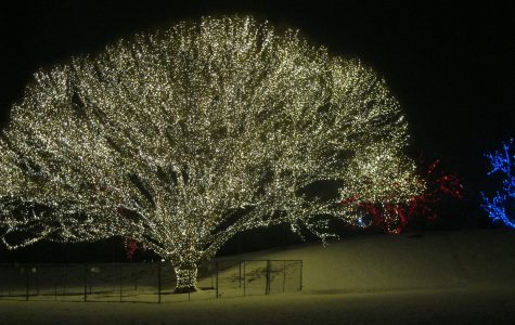 "A lot of students have gone to see this amazing light display at Draper City Park. This shows the popular ""tree of life"" on January 1,2017."
