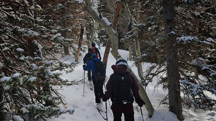 Skiers hike through trees in Big Cottonwood Canyon, February 4th, 2017.