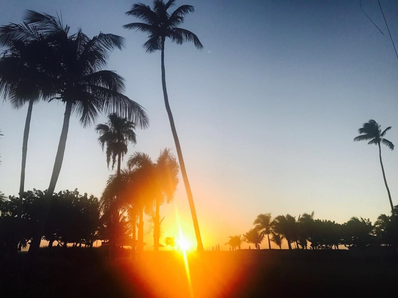 Beautiful sunset in California, with tall palm trees. Taken March 11, 2017.