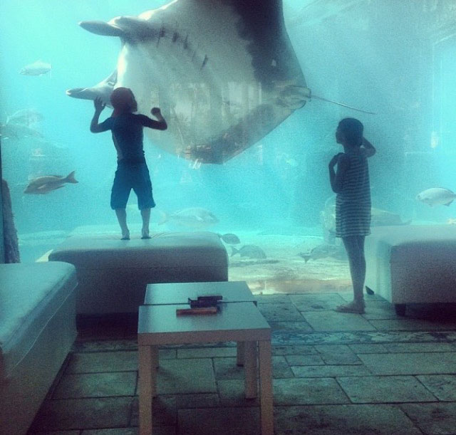 A manta ray joining us for breakfast, December 2012.
