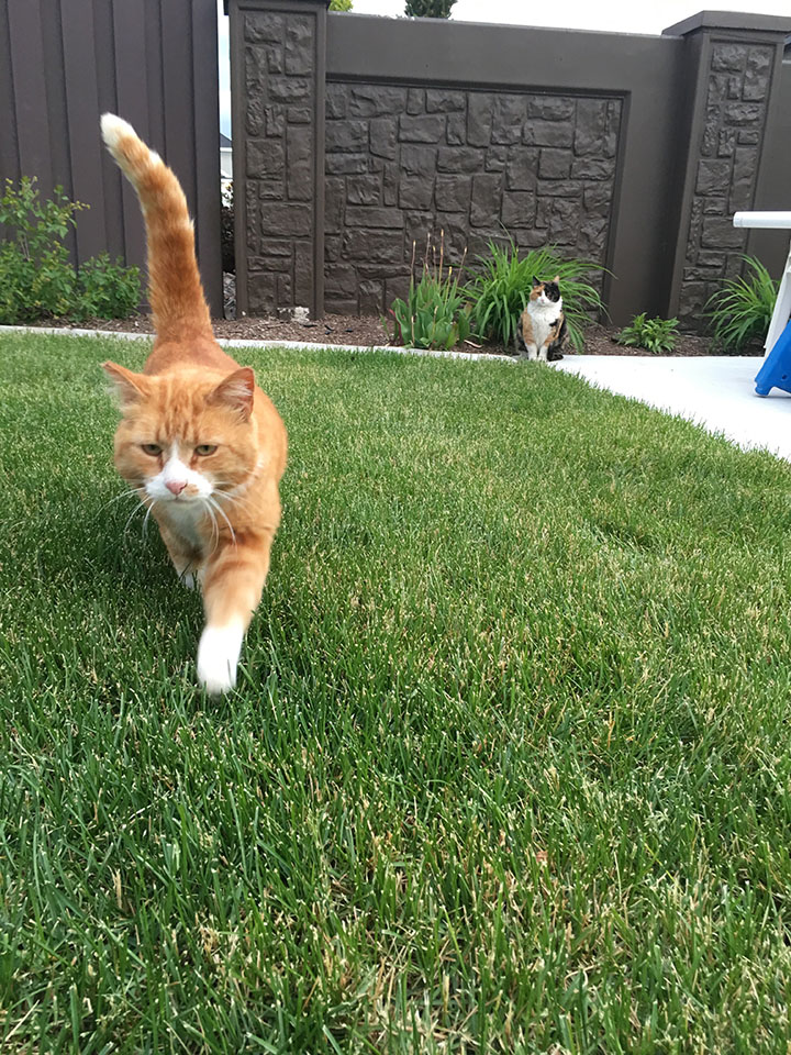 J.J. and Cami walking around in the grass on May 18th, 2017.
